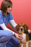 Vet Checkup Royalty Free Stock Images