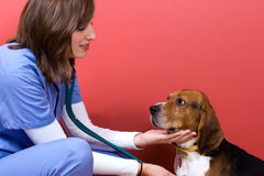 Vet Checkup Stock Photos
