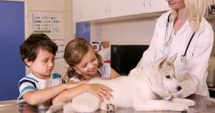 Vet and children stroking a dog stock video footage