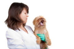 In a vet clinic Royalty Free Stock Image