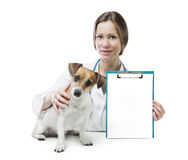 Vet clinic banner Stock Photography
