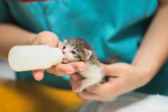 Vet Clinic - Kitten Drinking Milk Stock Images