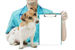 Vet clinick banner Stock Photos