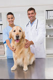 Vet coworker examining dog Royalty Free Stock Images
