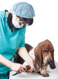 Vet cutting dog claws Stock Photos