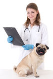 Vet doctor checking pug dog isolated on white Stock Photo