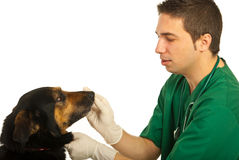 Vet doctor with dog. Vet male doctor with dog isolated on white background royalty free stock photo