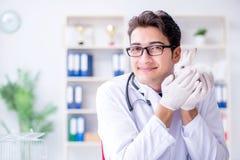 The vet doctor examining rabbit in pet hospital Royalty Free Stock Photography