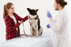 Dog getting checked at vet clinic with thir owner. Vet doctor holds injection while standning next to patient and their owner. Pretty girl with light brown hair Royalty Free Stock Images