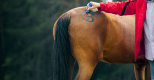 Vet doctor makes marking on a horse Royalty Free Stock Photo