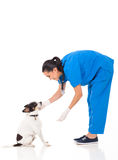 Vet playing dog Stock Photo