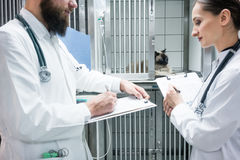 Vet doctors on visit round in ICU of veterinarian clinic Royalty Free Stock Images