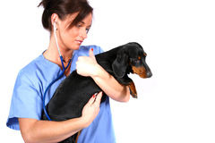 Vet with dog. Vet with sick dog royalty free stock images