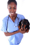 Vet and Dog. African American Vet and Dog stock photos