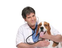 Vet and dog Royalty Free Stock Photos
