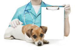 Vet and Dog with banner Royalty Free Stock Images