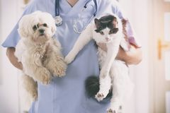 Vet with dog and cat. In his hands Royalty Free Stock Image