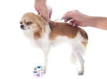 Vet and dog Stock Photos