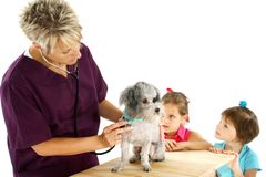 Vet, Dog And Children royalty free stock photos