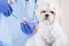 Vet dog and client Royalty Free Stock Image