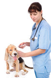 Vet and dog - getting a vaccine. isolated on white background Stock Photography