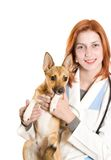 Vet and dog golden color Royalty Free Stock Photography