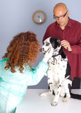 Vet With Dog and it owner In Surgery Royalty Free Stock Photography