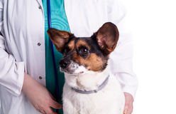 Vet with dog Royalty Free Stock Photos