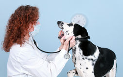 Vet With Dog In Surgery Stock Image