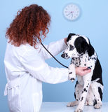 Vet With Dog In Surgery Royalty Free Stock Photography