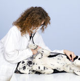 Vet With Dog In Surgery Royalty Free Stock Image