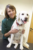 Vet With Dog In Surgery. Looking happy and smiling Stock Photography