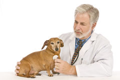 Vet Examines Patient Stock Photos