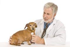Vet Examines Patient Stock Photos