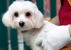 Vet Examining A Cute Dog Royalty Free Stock Photos