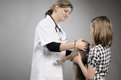 Vet examining baby dog Royalty Free Stock Photos
