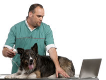 Vet examining a Border Collie with a digital