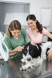 Vet Examining Border Collie's Ear With Otoscope By Woman Stock Image