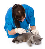 Vet examining a cat's ear with an otoscope. isolated Royalty Free Stock Photography