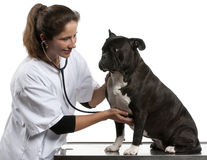 Vet examining a Crossbreed dog. Dog with a stethoscope in front of white background stock image