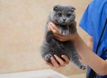 Vet Examining Cute Little Kitten In Veterinary Clinic. Stock Photos