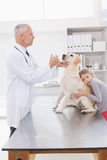 Vet examining a dog with its anxious owner. In medical office Royalty Free Stock Photo