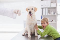 Vet examining a dog with its scared owner Stock Image