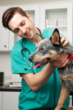 Vet Examining Dog In Surgery Royalty Free Stock Photos