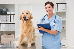Vet examining a dog and writing on clipboard Royalty Free Stock Images