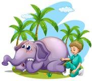 Vet examining elephant in the park Royalty Free Stock Photography