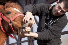Vet examining horse Stock Photography