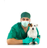 Vet examining an jack russell Royalty Free Stock Photography