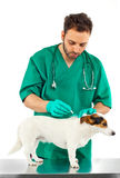 Vet examining an jack russell Royalty Free Stock Photo