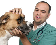 Vet examining a mixed-breed dog. In front of white background Stock Photography